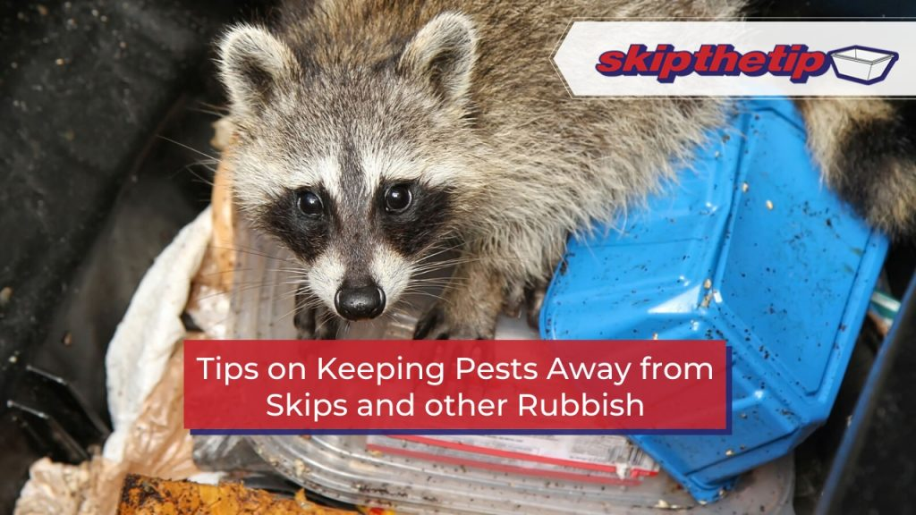 Tips on Keeping Pests Away from Skips and other Rubbish